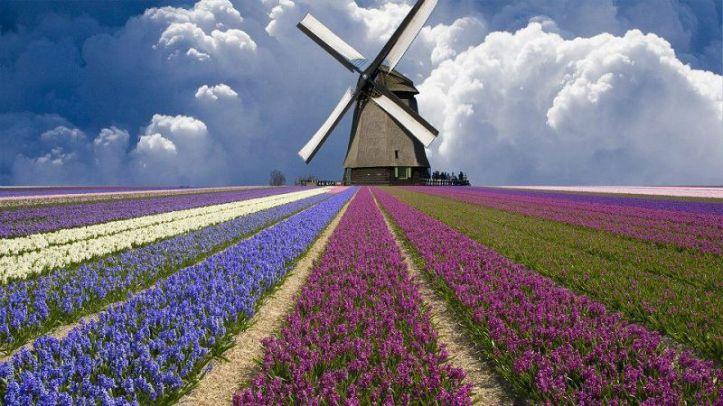 Molinos-de-viento-en-Holanda